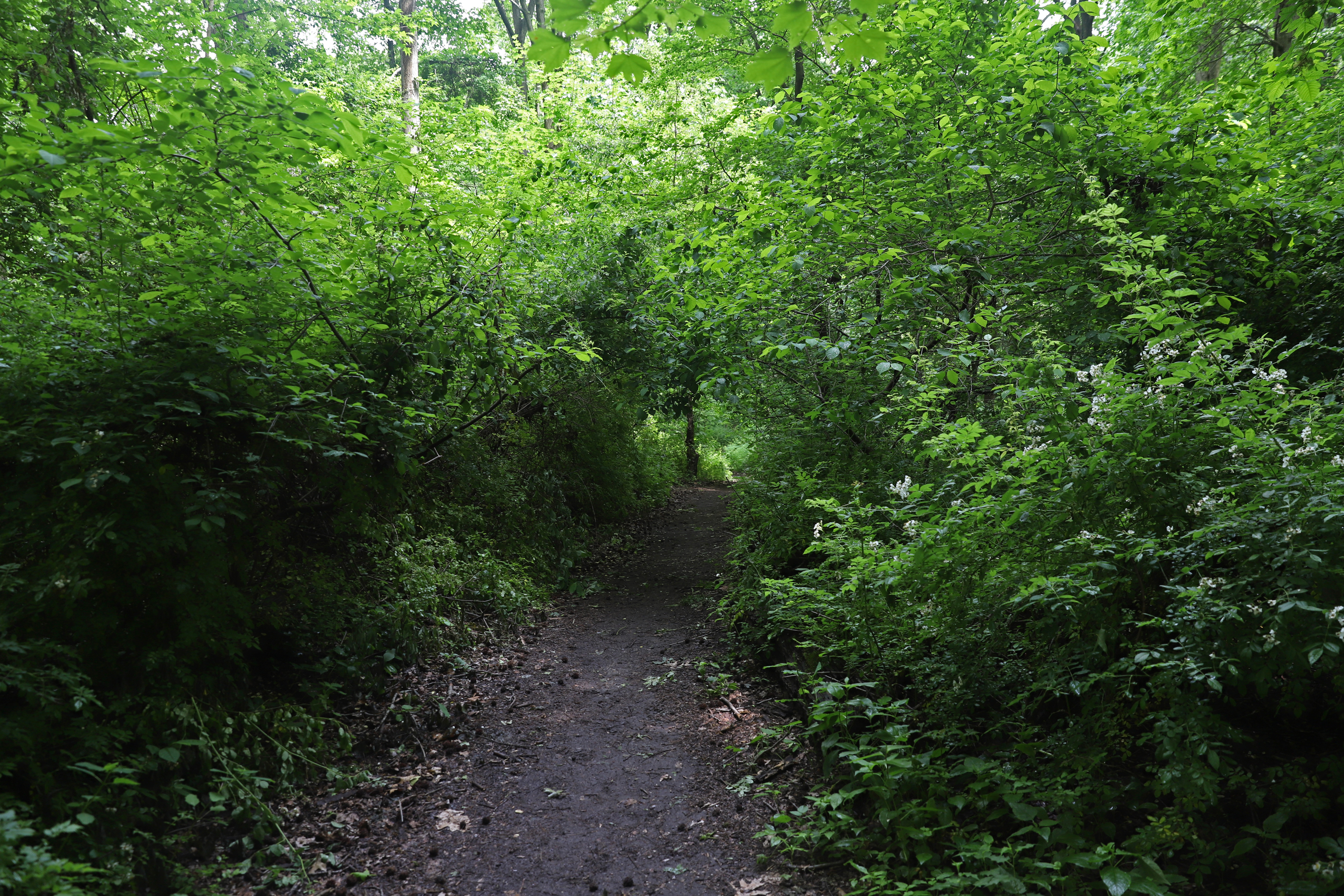 Alley Pond Park in Queens has a number of hiking trails, June 4, 2021.
