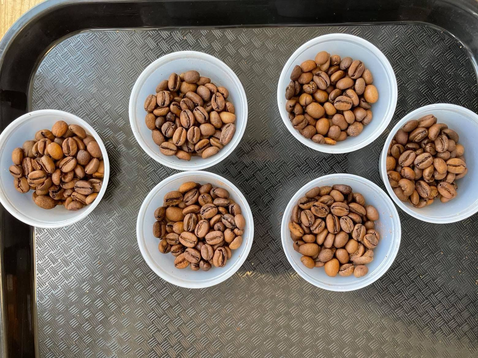 Various cups of lightly roasted coffee beans in cups.