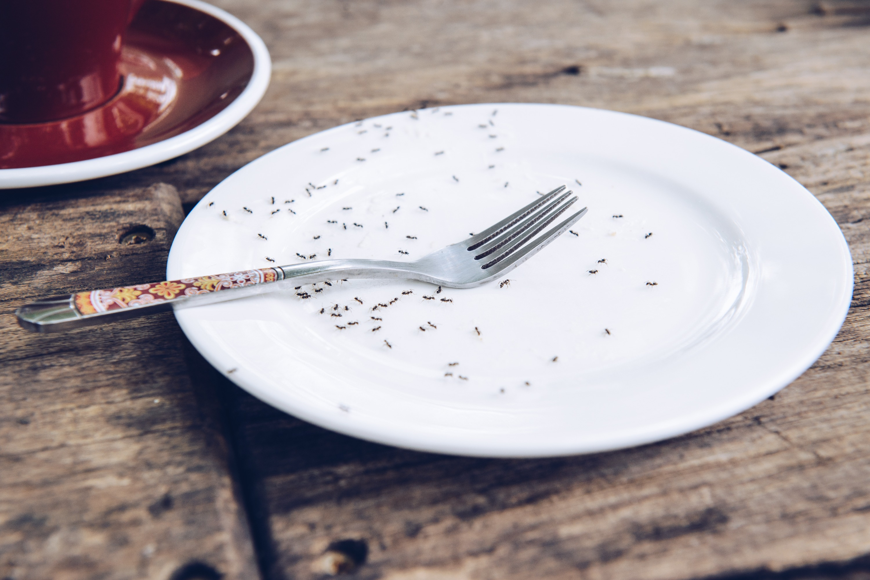 Ants on a white porcelain plate with a silver spoon on a wooden table near a red coffee mug.