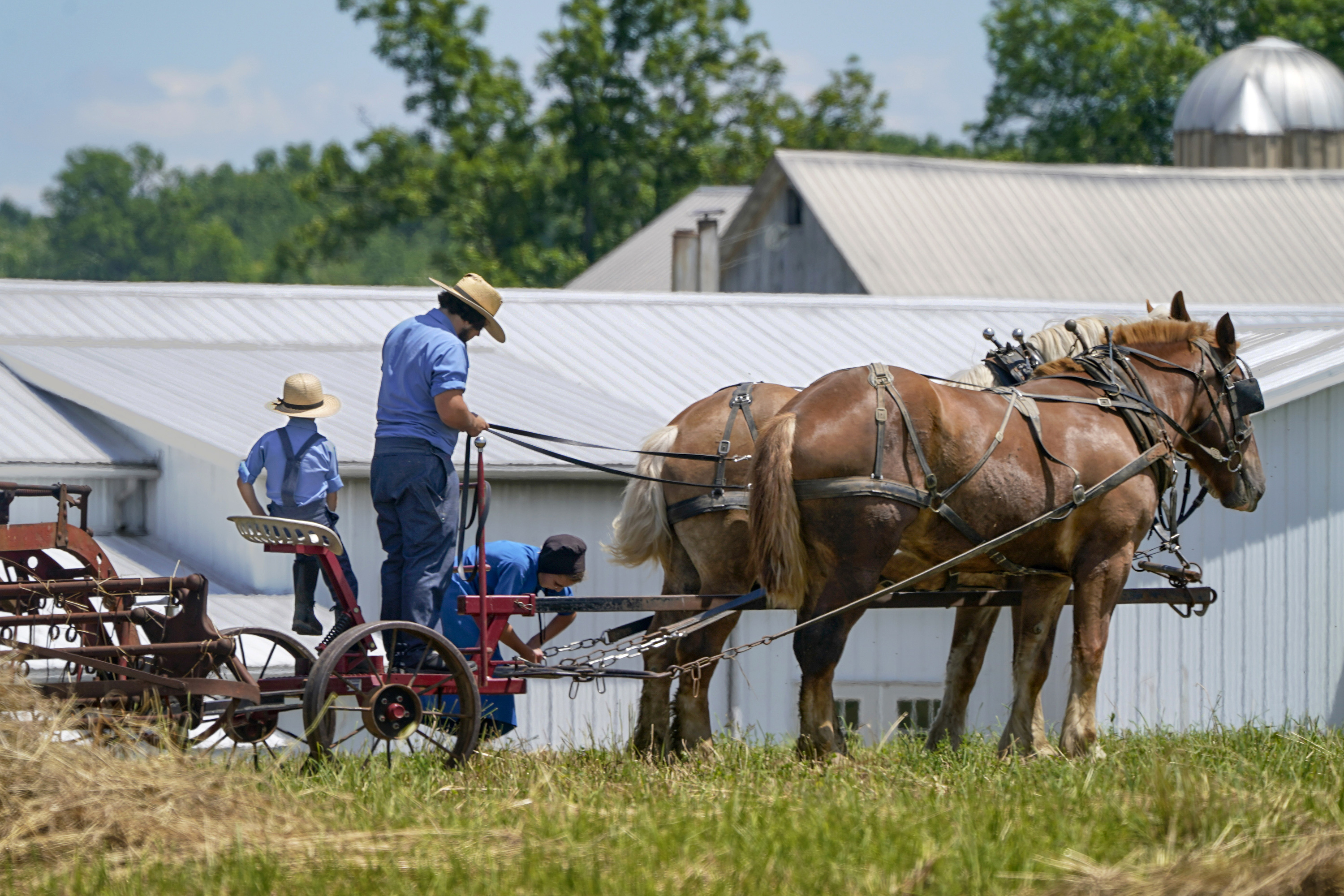 People in Amish country prepare a horse team to work on a farm in Pulaski, Pennsylvania, in June. The vaccination drive is lagging far behind in many Amish communities across the U.S. following a wave of virus outbreaks that swept through their churches and homes during the past year.