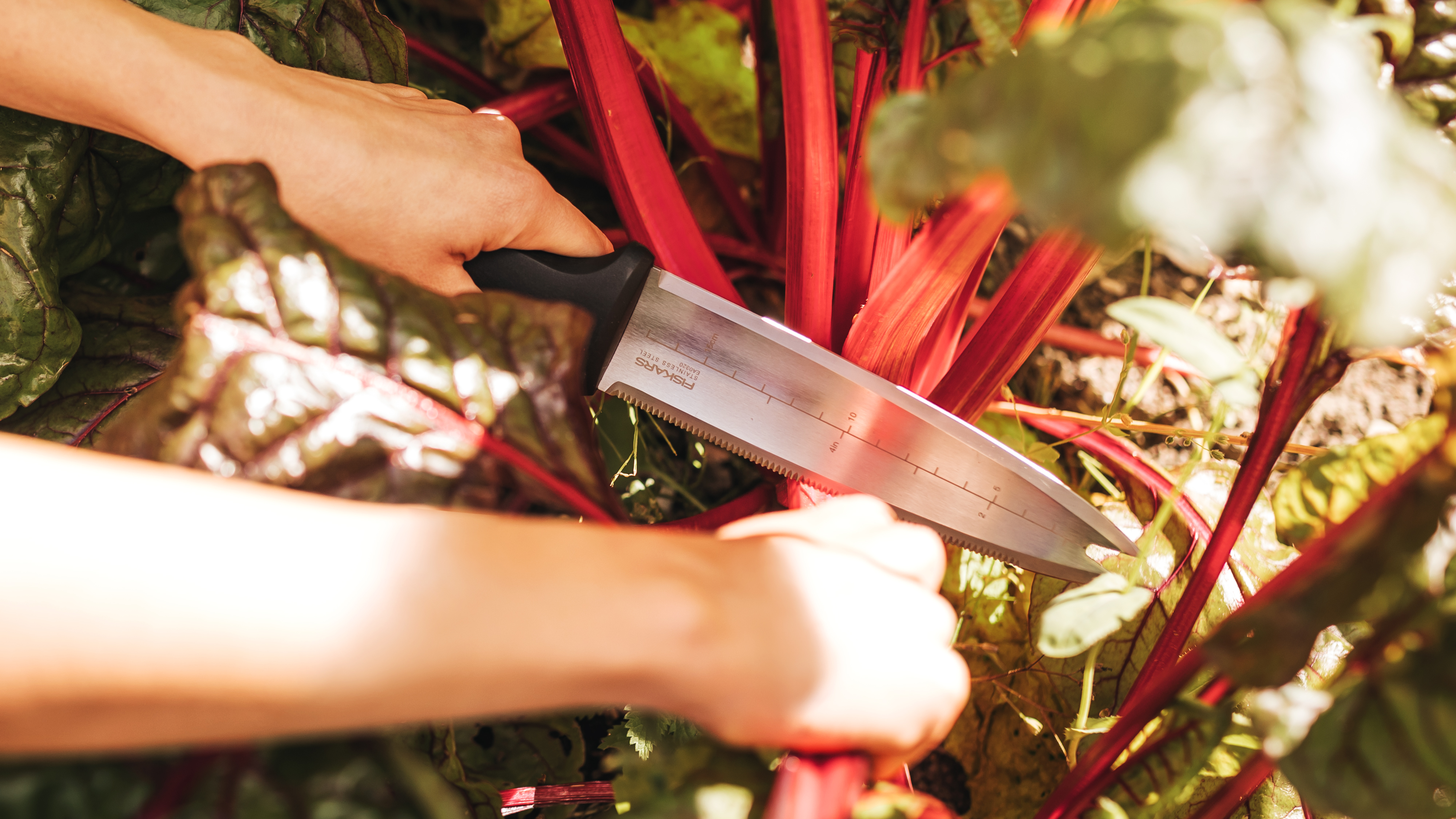 Summer 2021, What's New, Japanese gardening knife