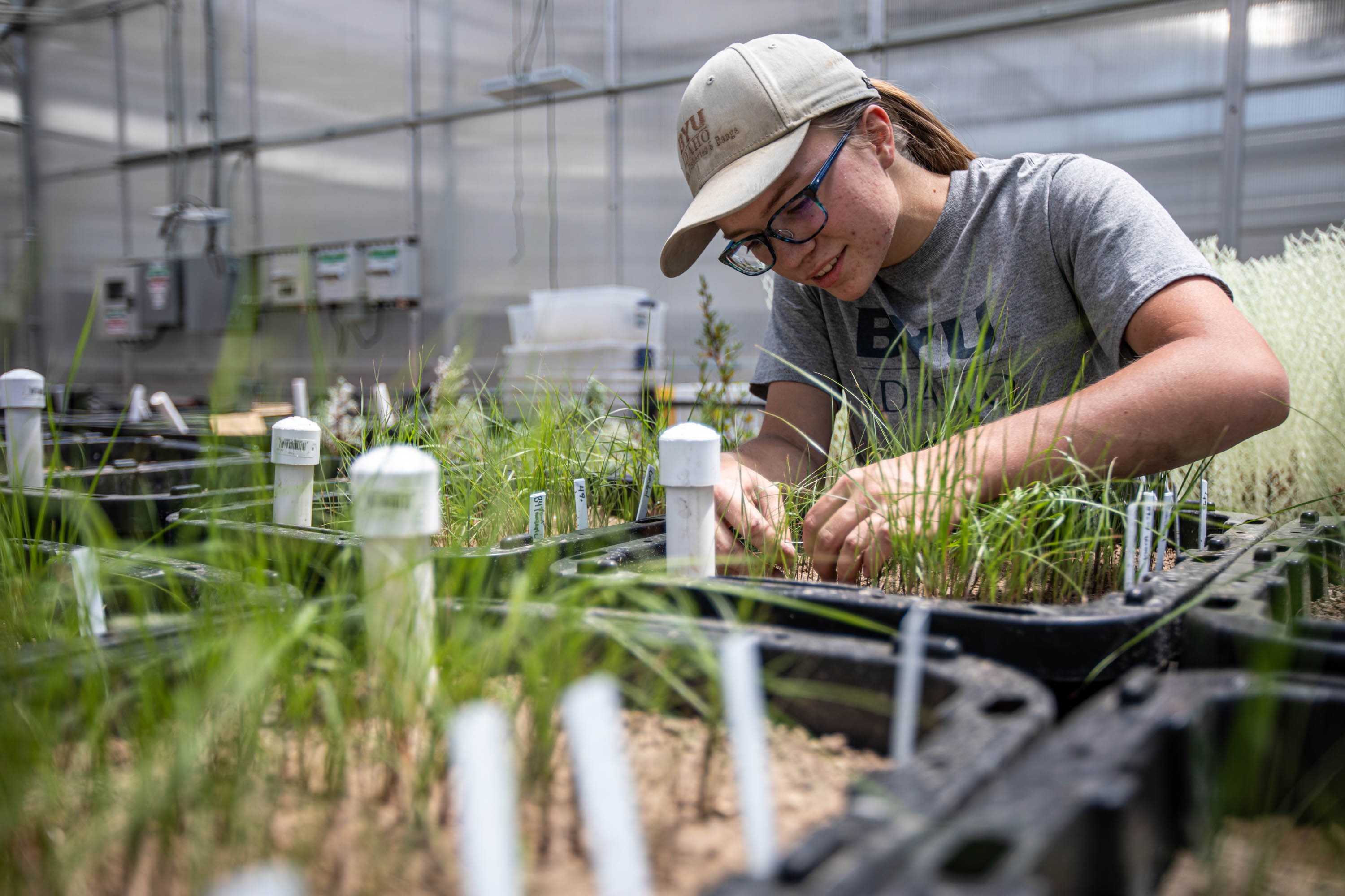BYU graduate student Amber Johnson checks for new sprouts in a lab on the BYU campus in Provo on June 25, 2021. Rio Tinto Kennecott and Brigham Young University researchers are joining forces to develop innovative and sustainable solutions to improve reclamation at the Bingham Canyon Mine. In June 2020, a group of students and professors from the BYU Department of Plant and Wildlife Sciences broke ground on four research projects on land areas surrounding the mine with the goal to increase plant diversity, stability and enhance the aesthetics of areas visible from the Salt Lake Valley.