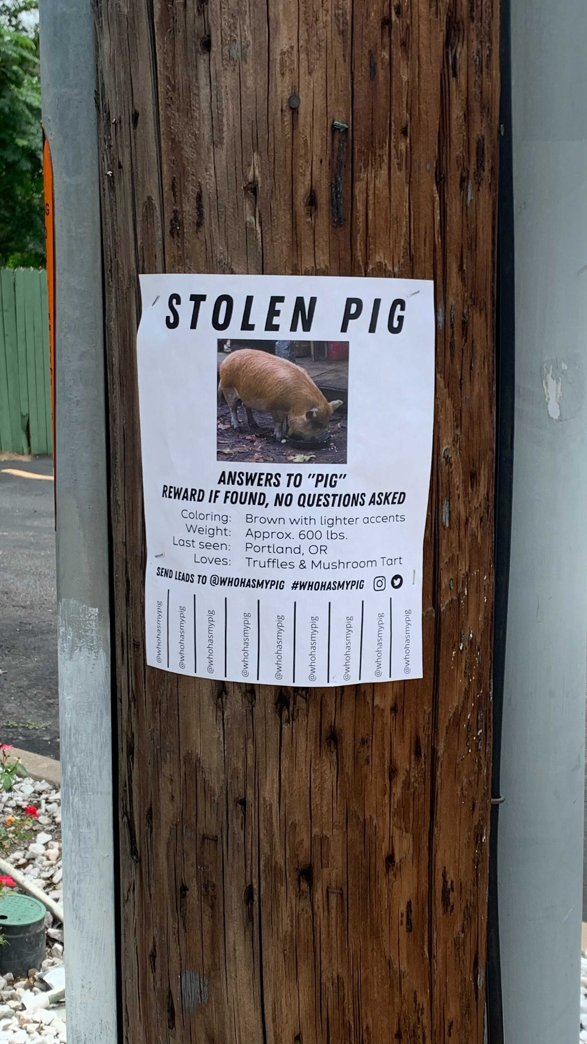 """A """"Stolen Pig"""" poster spotted in Austin is really a promotion for the new Nicolas Cafe movie about a kidnapped truffle pig"""