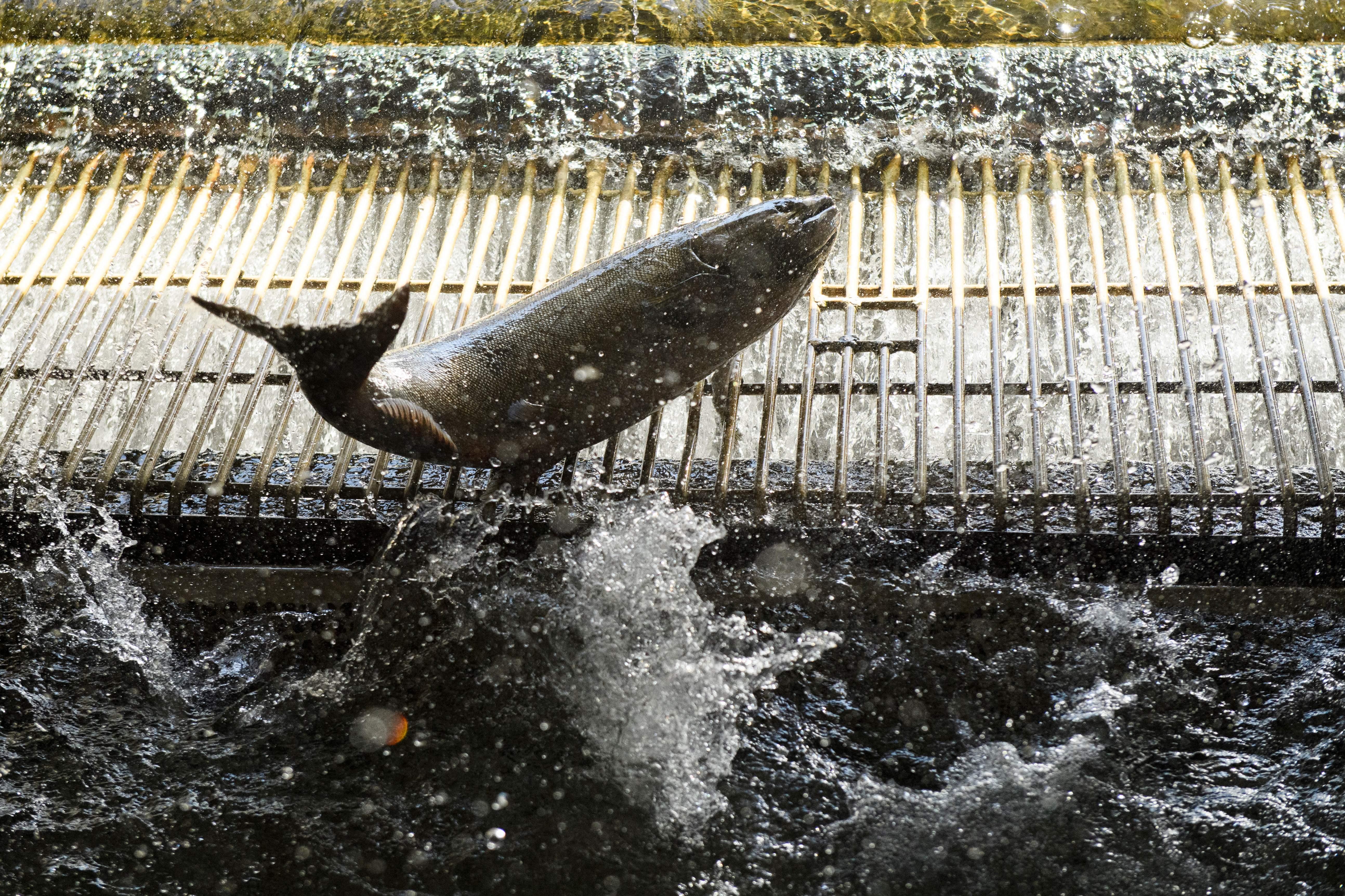US-ENVIRONMENT-DROUGHT-FISHING