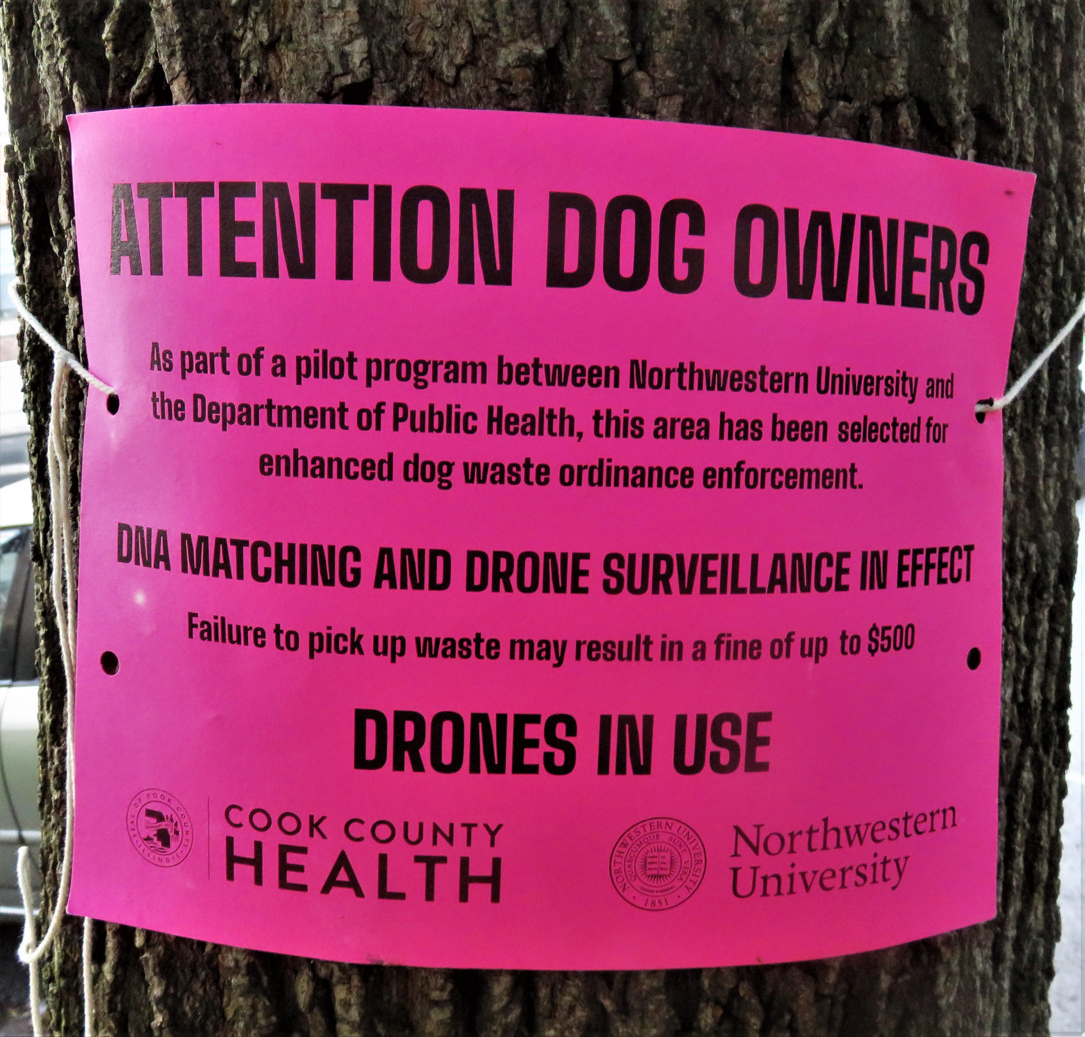 A magenta sign warning of a study involving drones and DNA being used to monitor dog waste, photographed in the 6500 block of North Greenview Avenue in Rogers Park this week.