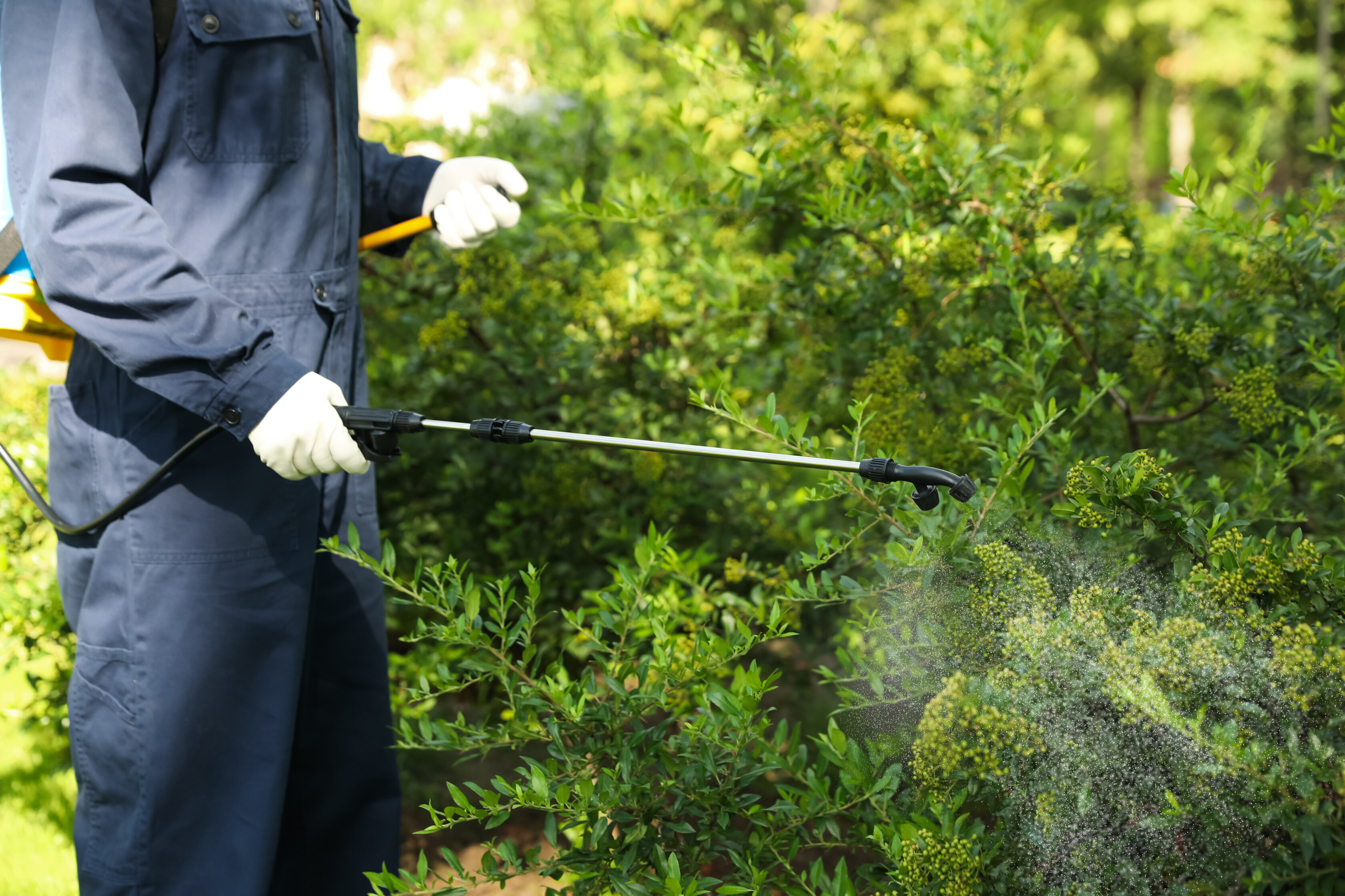 A pest control specialist wearing a navy blue jumpsuit and white protective gloves uses a wand tp spray pest control solution on green shrubs.