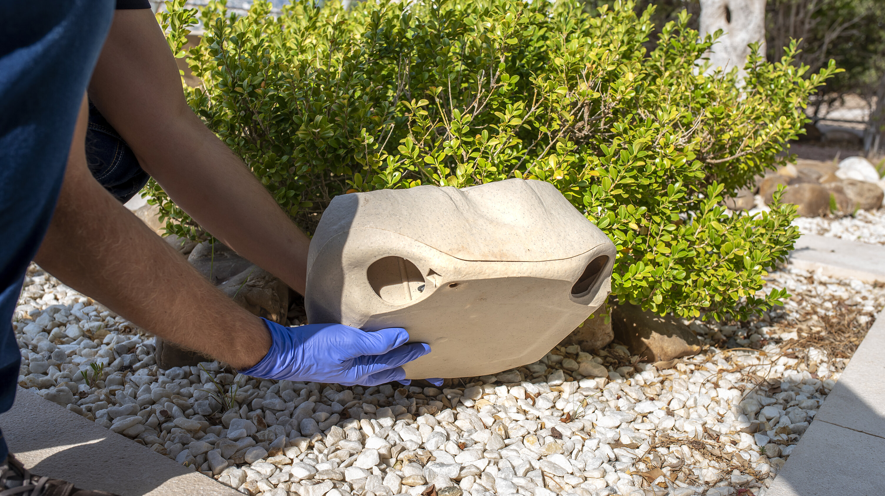 A specialist places a mouse trap that is disguised as a natural rock in the yard of a home near some green bushes.