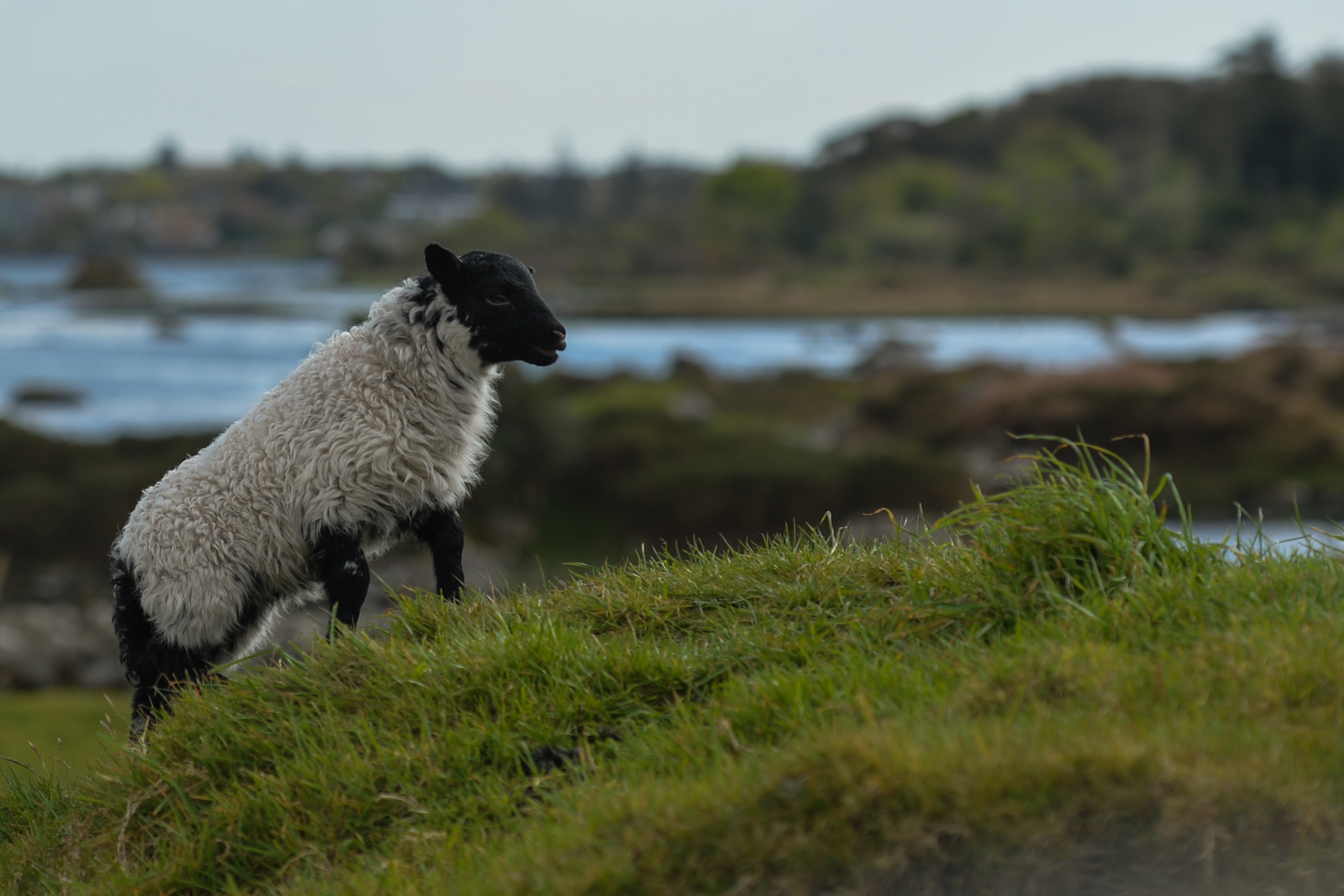 Daily Life In Connemara During COVID-19 Lockdown
