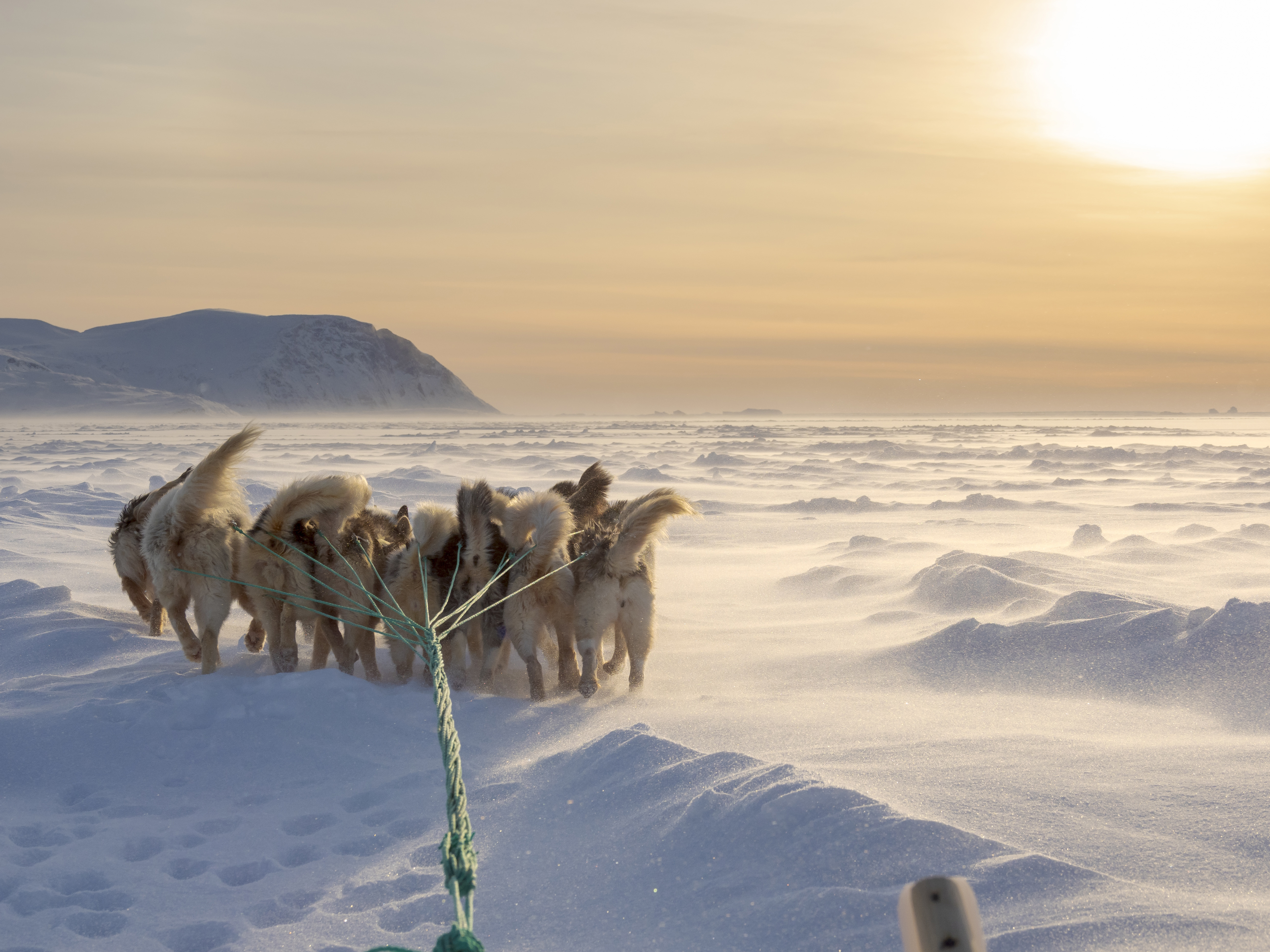 Dog sled in a fan hitch during a storm on the sea ice of the Melville Bay near Kullorsuaq in North Greenland. North America. danish teritorry