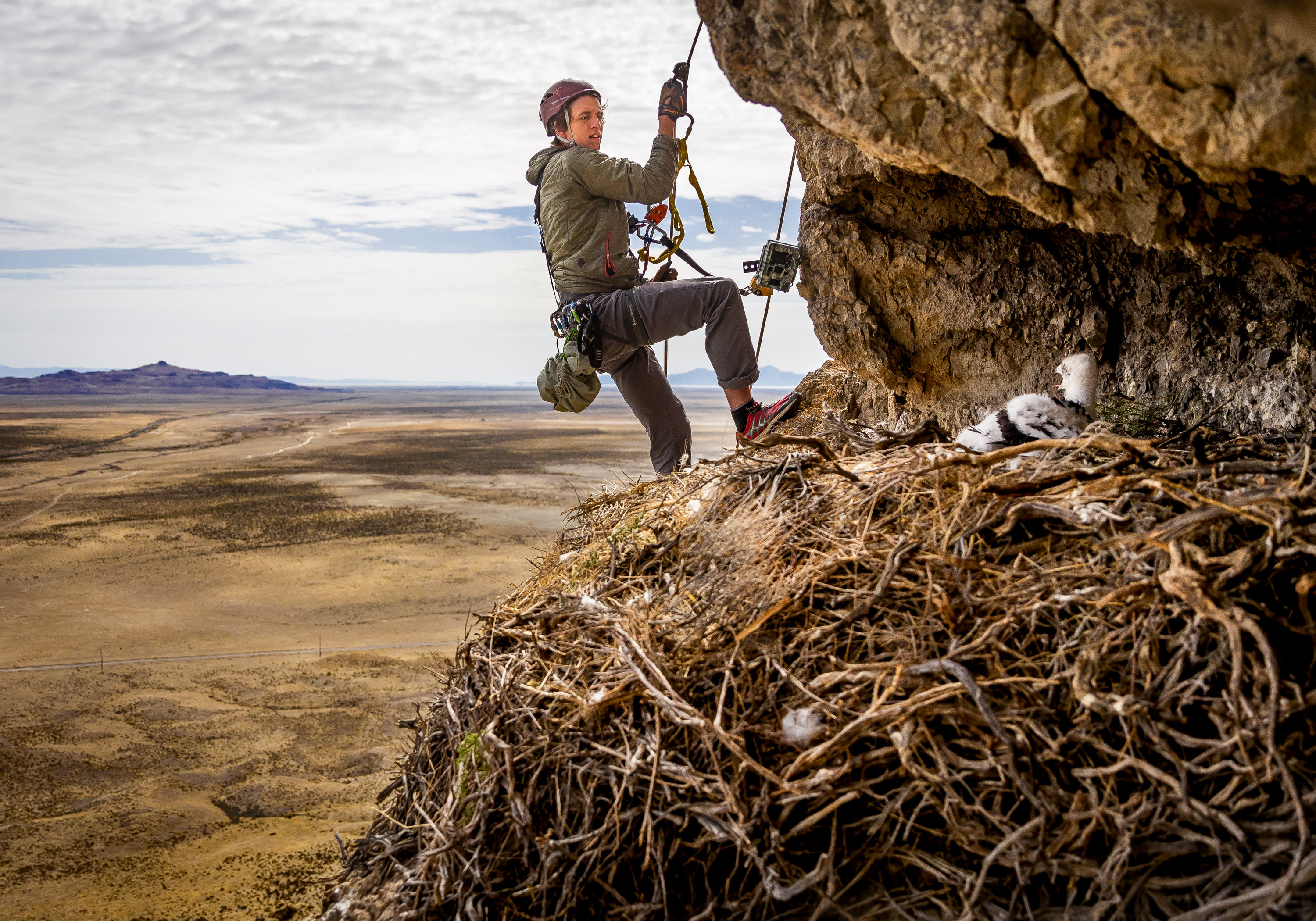 Hawkwatch International field biologist Max Carlin returns a golden eagle nestling to its nest after his team collected samples and data from it in a remote area of Box Elder County on Thursday, May 20, 2021.