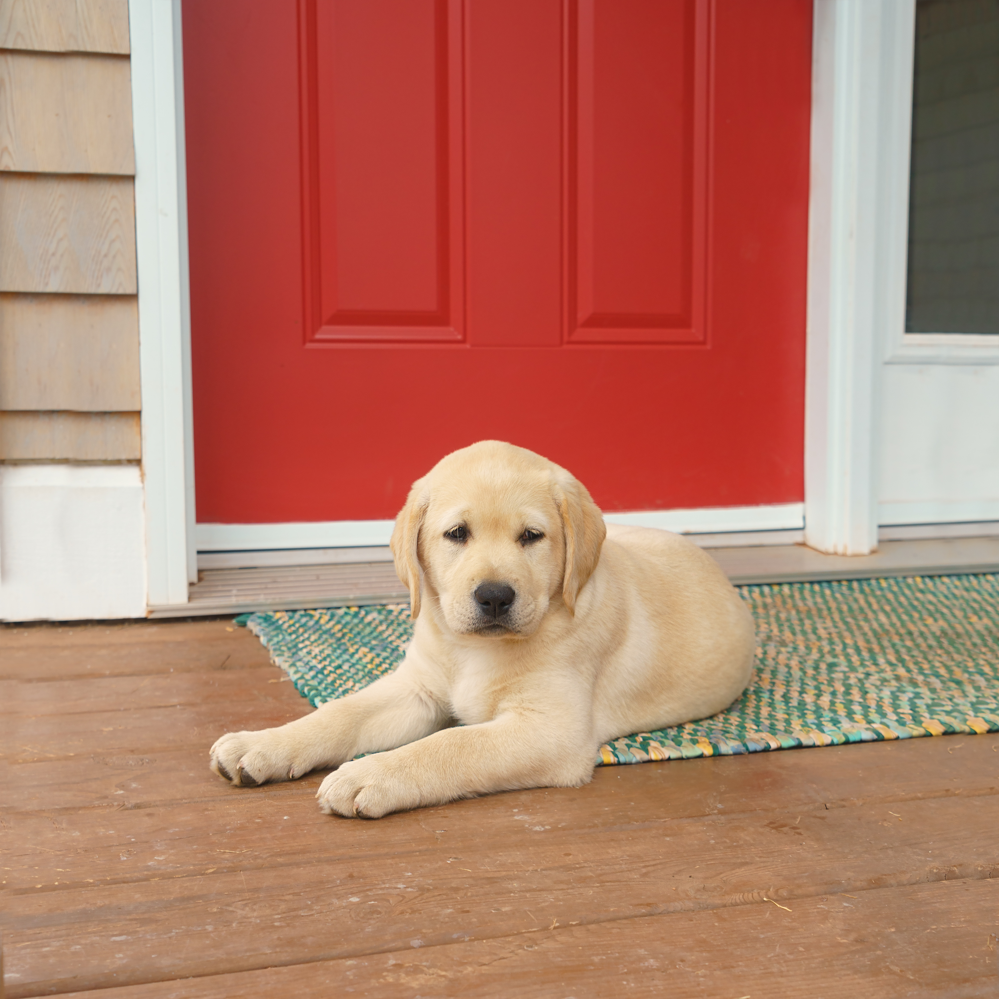 A yellow Labrador Retriever puppy lays on a multicolored green and yellow mat outside of a red front door on a wooden front porch.