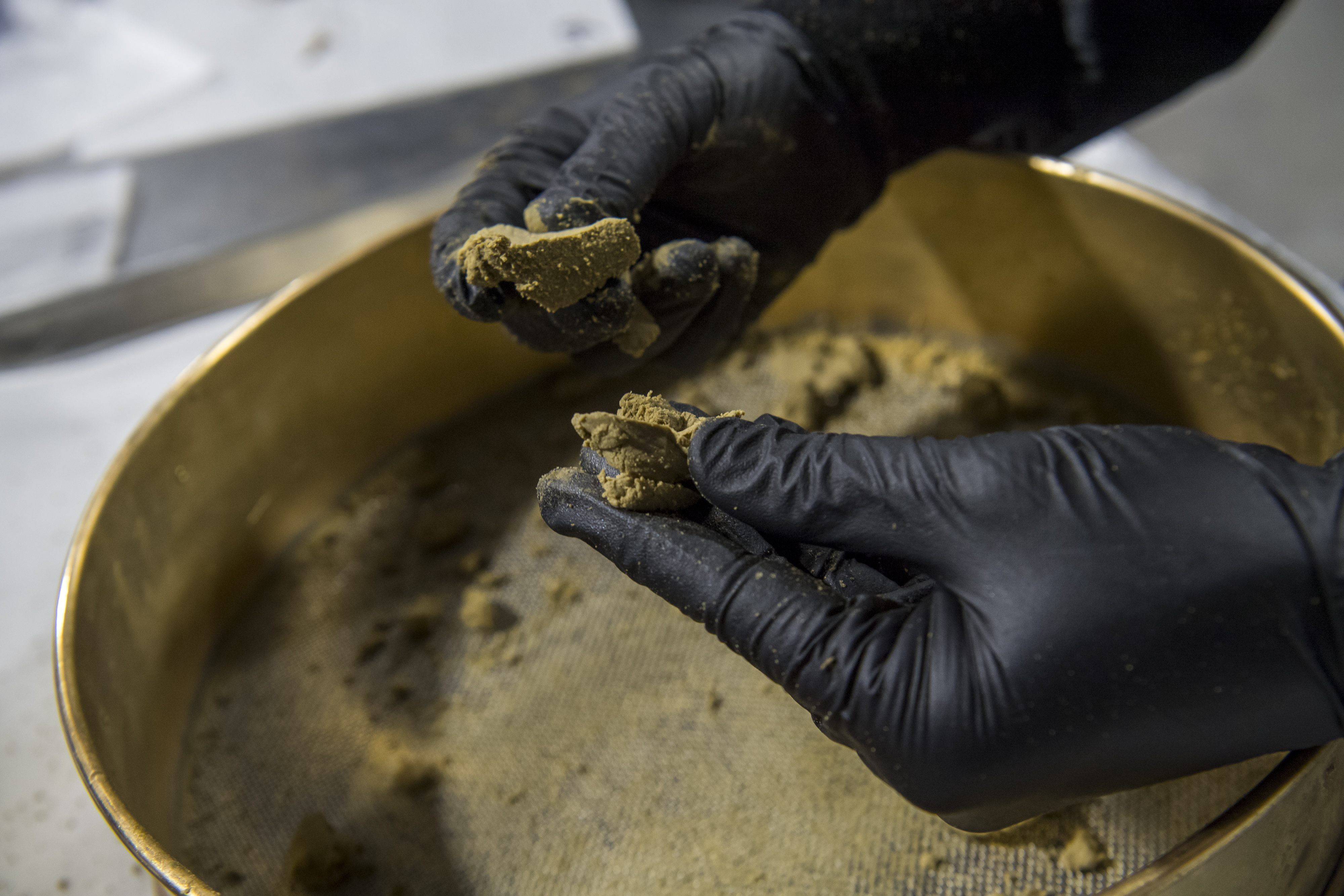 Hands in black vinyl gloves crumble hash over a stainless steel sifter.