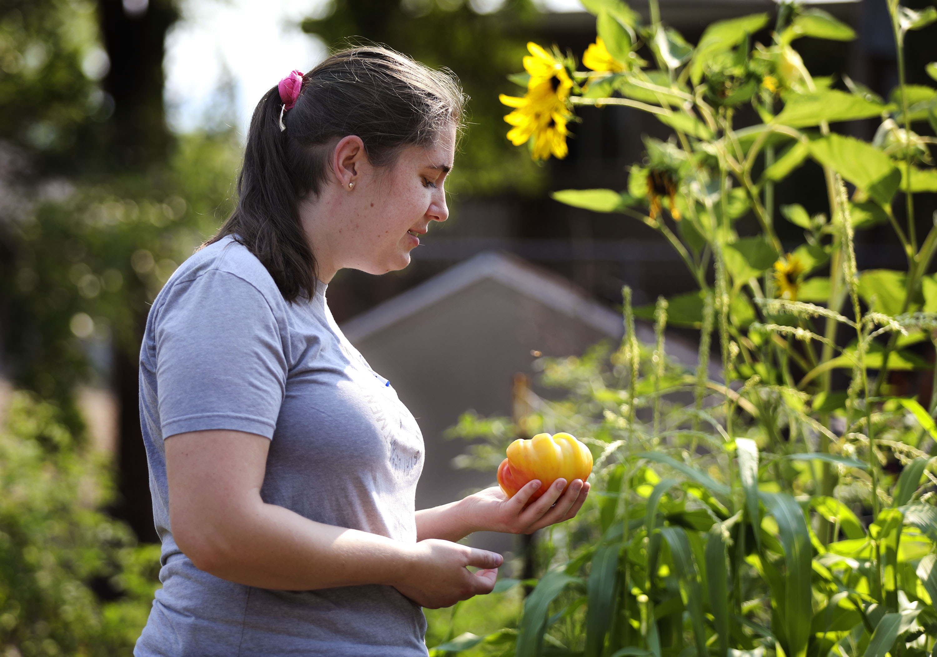 Gardener Bailey Roberts admires a tomato from her plot in a new community garden at Richmond Park in Salt Lake City.