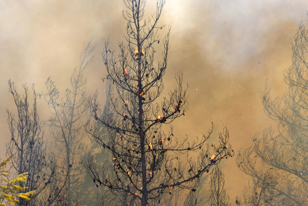 Fire burns a forest in Avgaria village on Evia island, north of Athens, Greece.