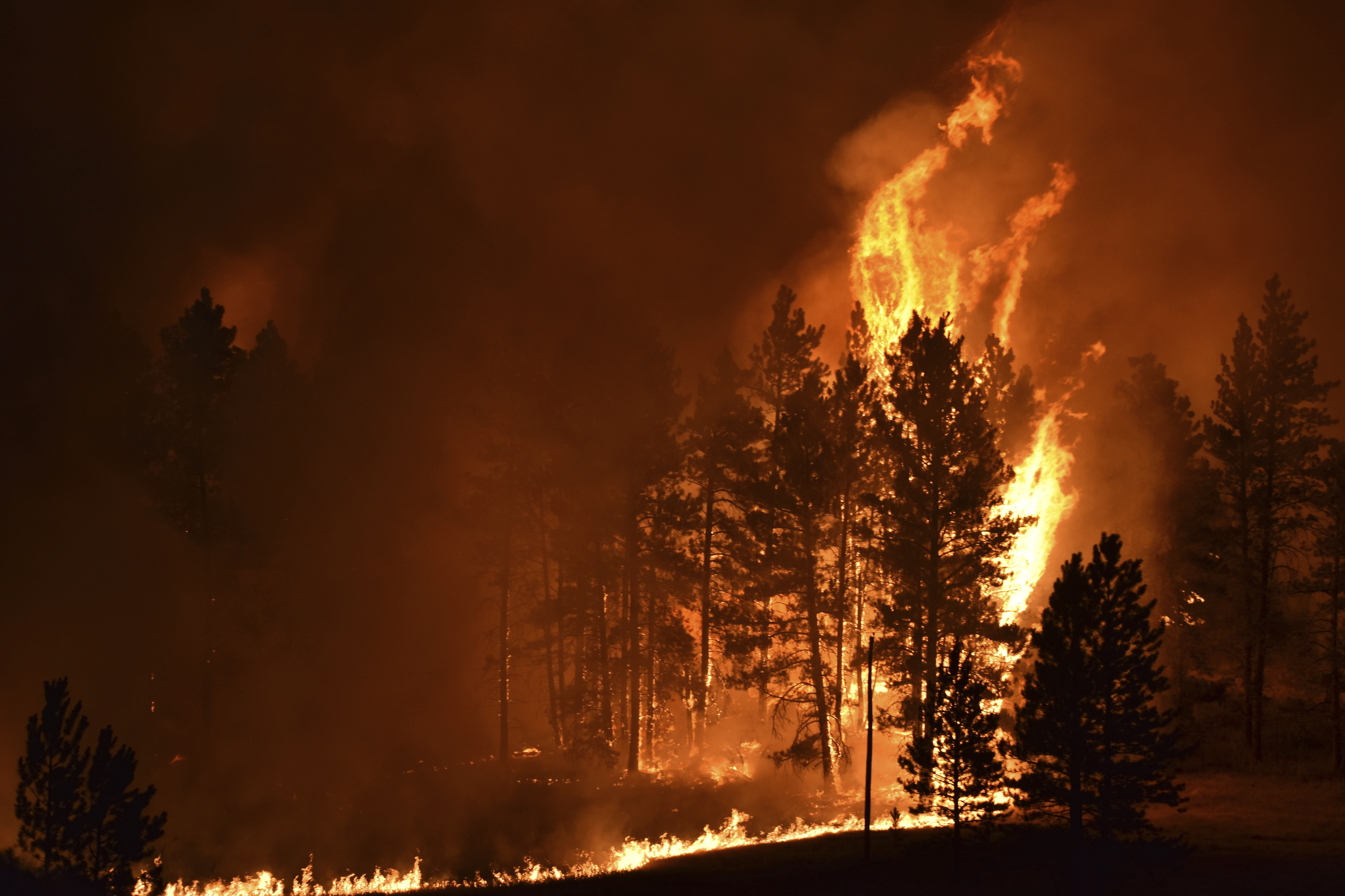 A tree goes up in flames as a wildfire burns on the Northern Cheyenne Indian Reservation near Lame Deer, Mont.