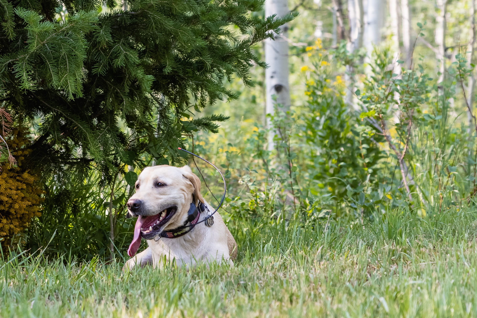 A cadaver dog rests after a search near the cabin once owned by the father of Utah death row inmate Douglas Lovell.