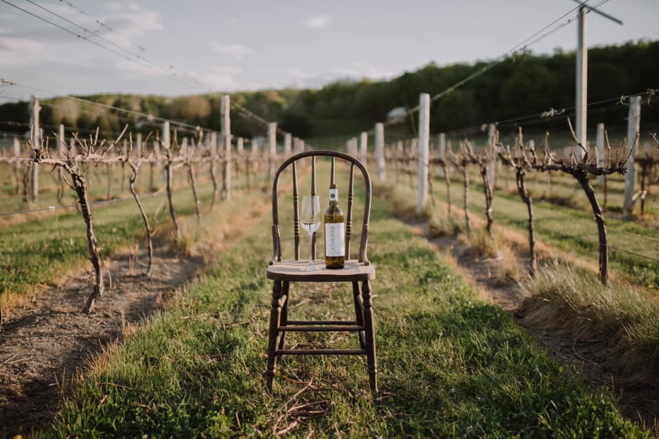 chair with bottle of wine in vineyard