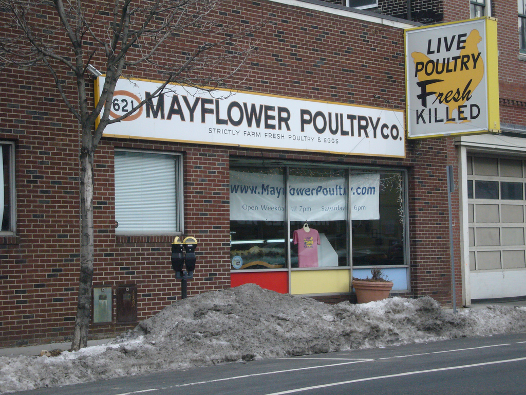 """One-story storefront in a brick building with signage that reads """"Mayflower Poultry"""" and """"Live Poultry Fresh Killed."""" A large pile of dirty snow is in front of the store."""