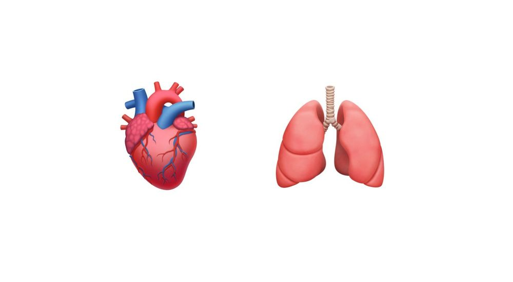 Emoji for the anatomical heart on the left and the lungs on the right, on a white background.