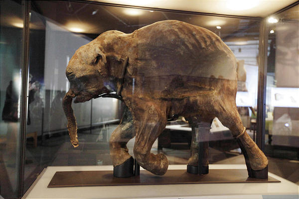 The most complete woolly mammoth specimen ever found in Chicago.