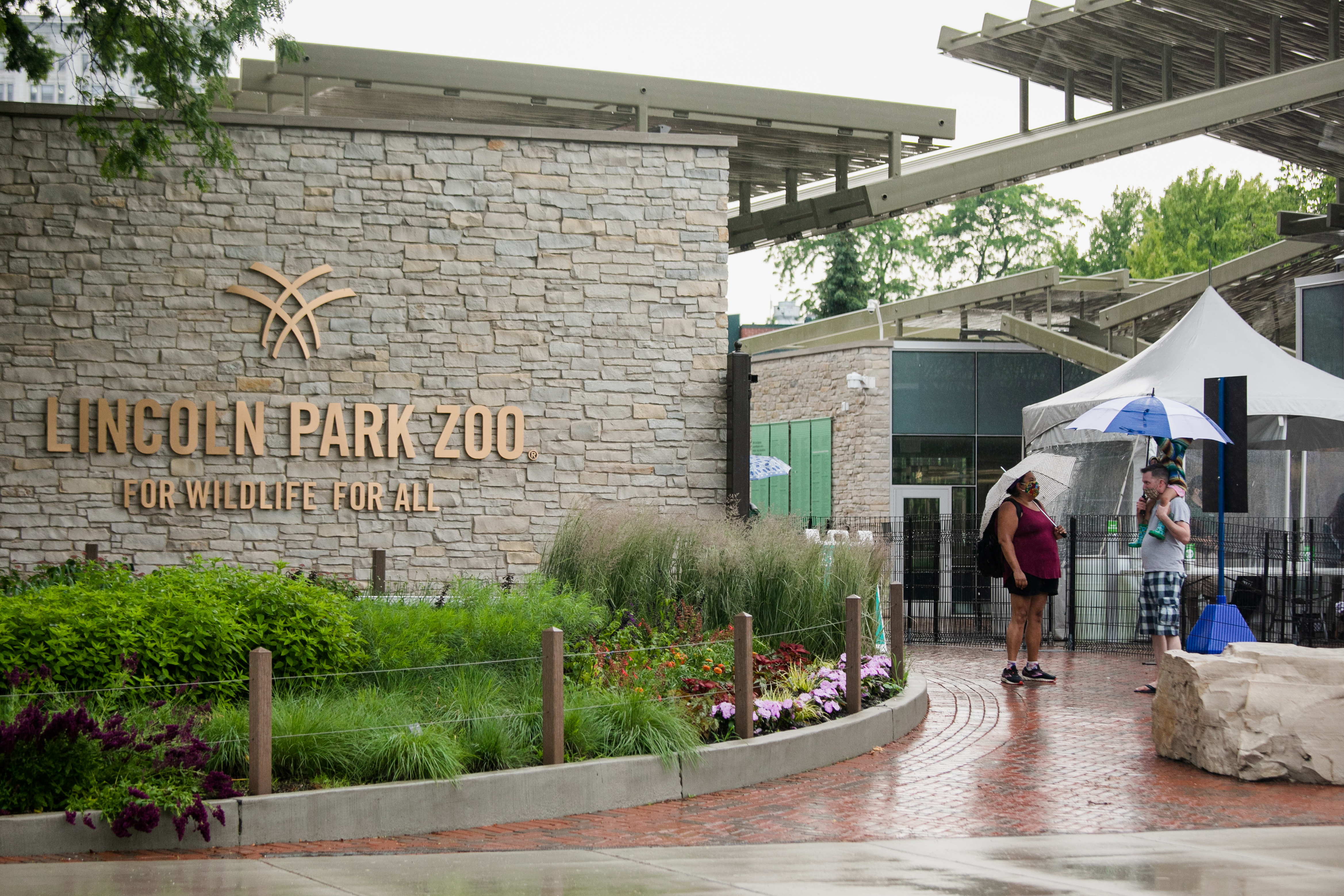 Guests of the Lincoln Park Zoo will be able to see lions and other big cats for the first time in nearly two years beginning Oct. 14.