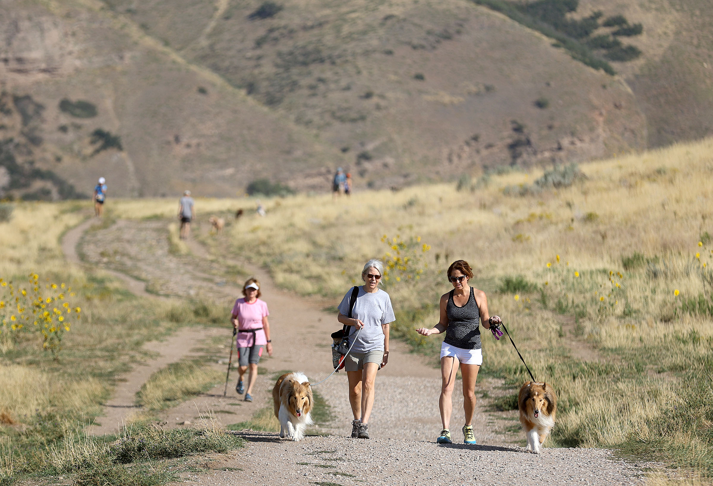 Mahala Kephart and Kelly Goff walk Ding and Queenie on the Bonneville Shoreline Access Trail in Salt Lake City.