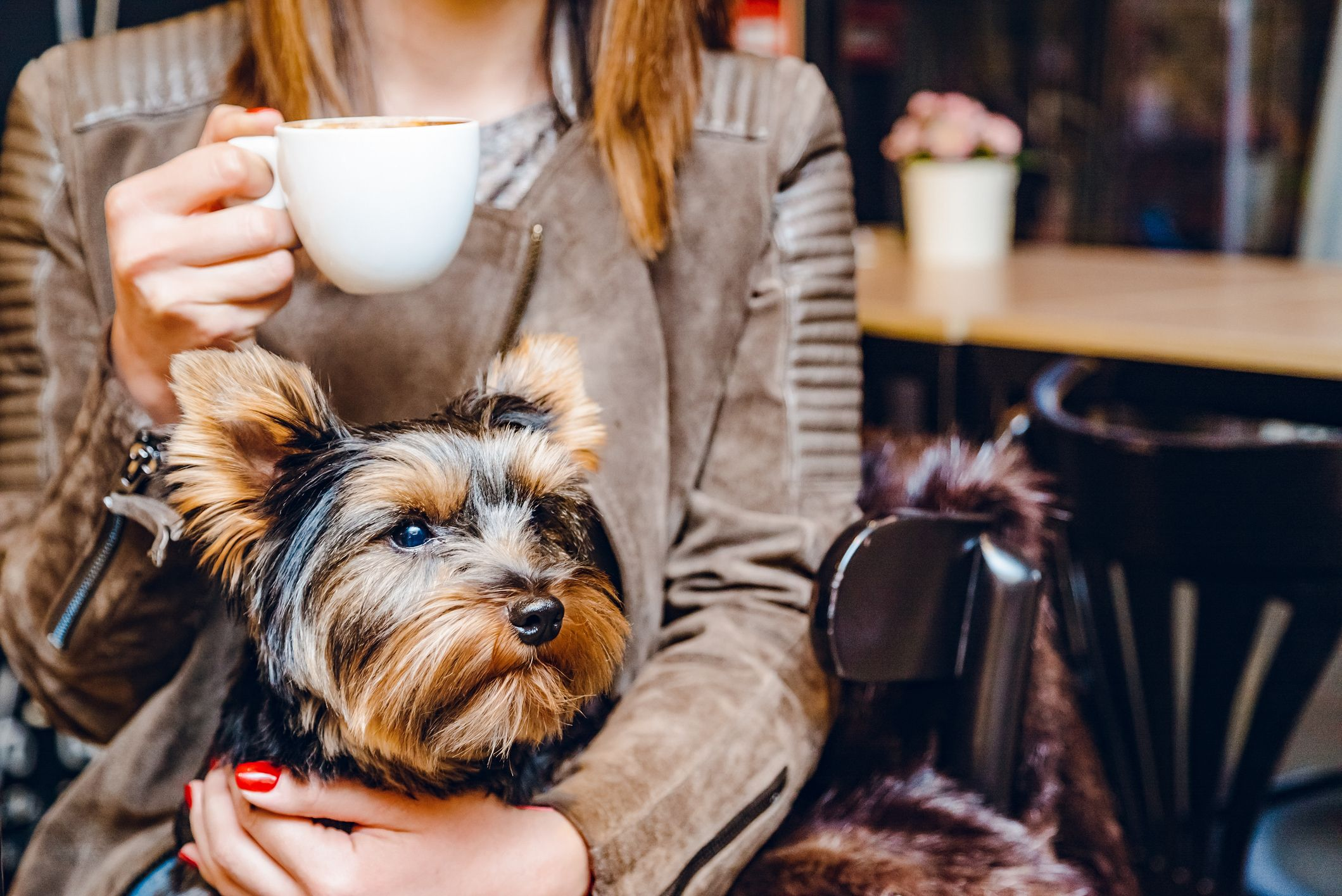 a person holding a small yorkie-type dog on their lap, with a cup of coffee in the other hand