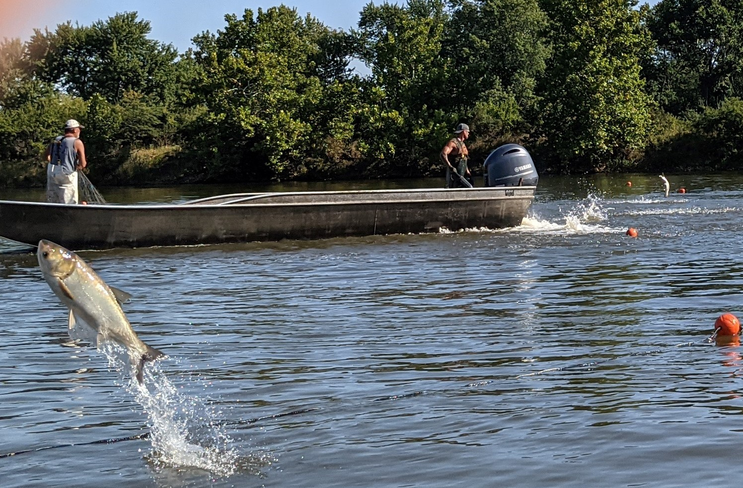Guy Price and his son Shawn (driving) circle jumping silver carp into nets at on the Illinois River. Credit: Dale Bowman