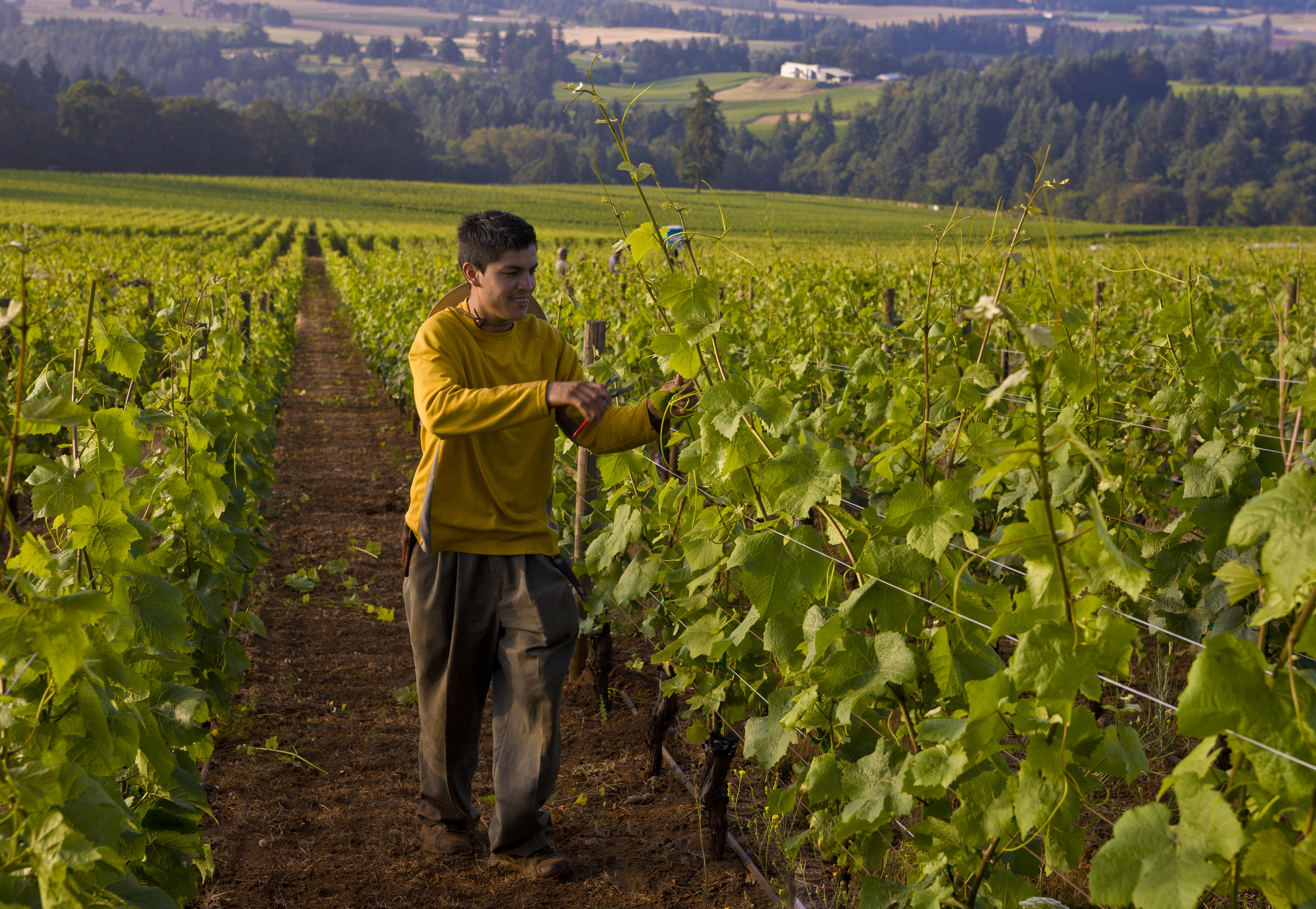 Exploring Oregon's Wine Country