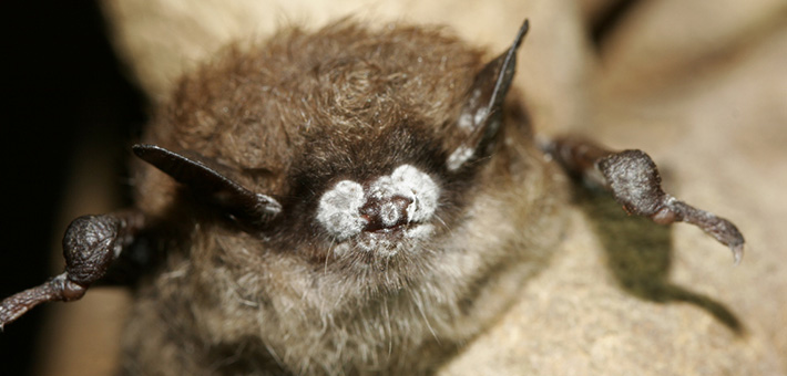 A rabid bat was found in Beverly on the South Side.
