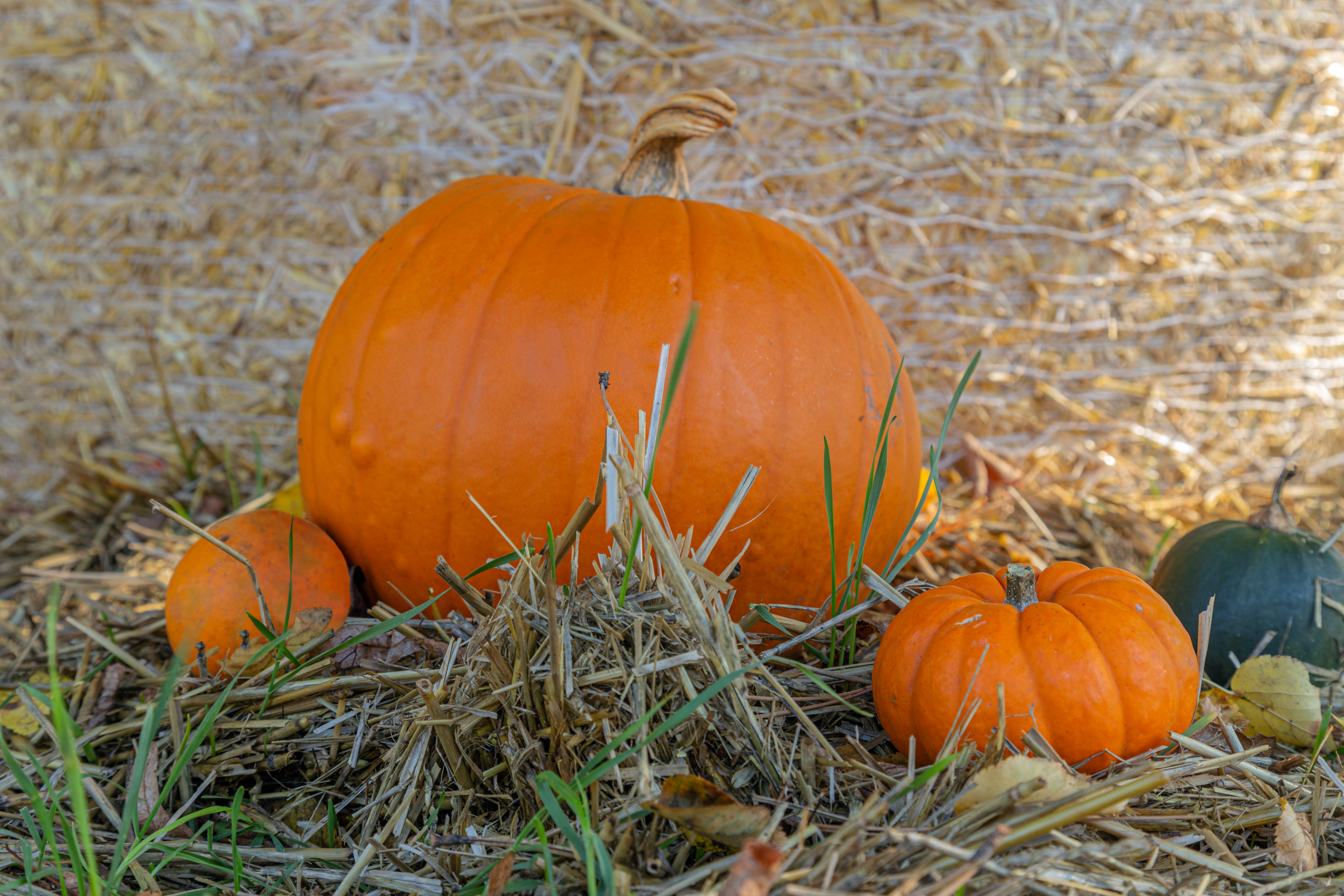 a large pumpkin sits in a field