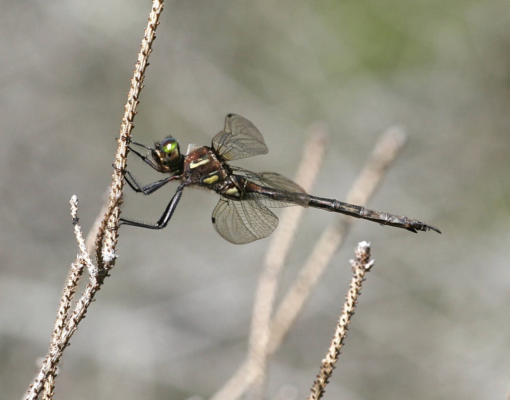 A 2010 oil spill near Lockport harmed protected wetlands and a habitat for the federally protected Hine's emerald dragonfly, officials say.