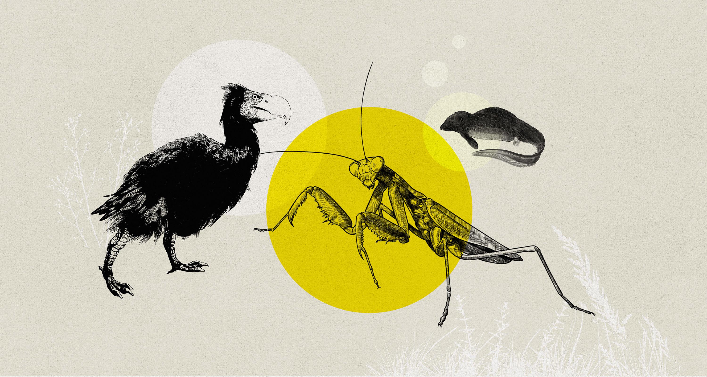An illustration of a dodo-like bird, a large praying mantis, and an aquatic rat.