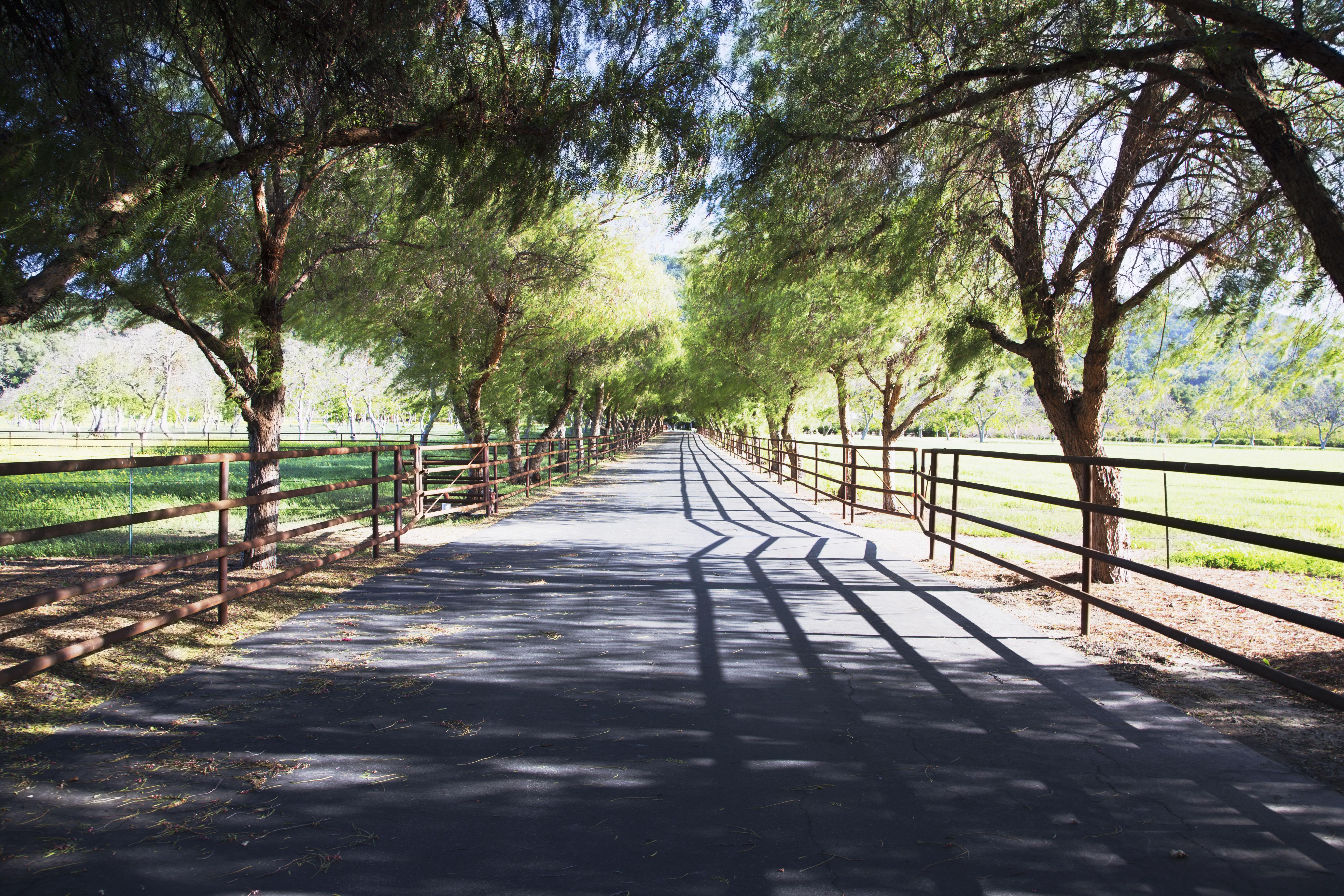 Tree lined road, Upper Ojai, California