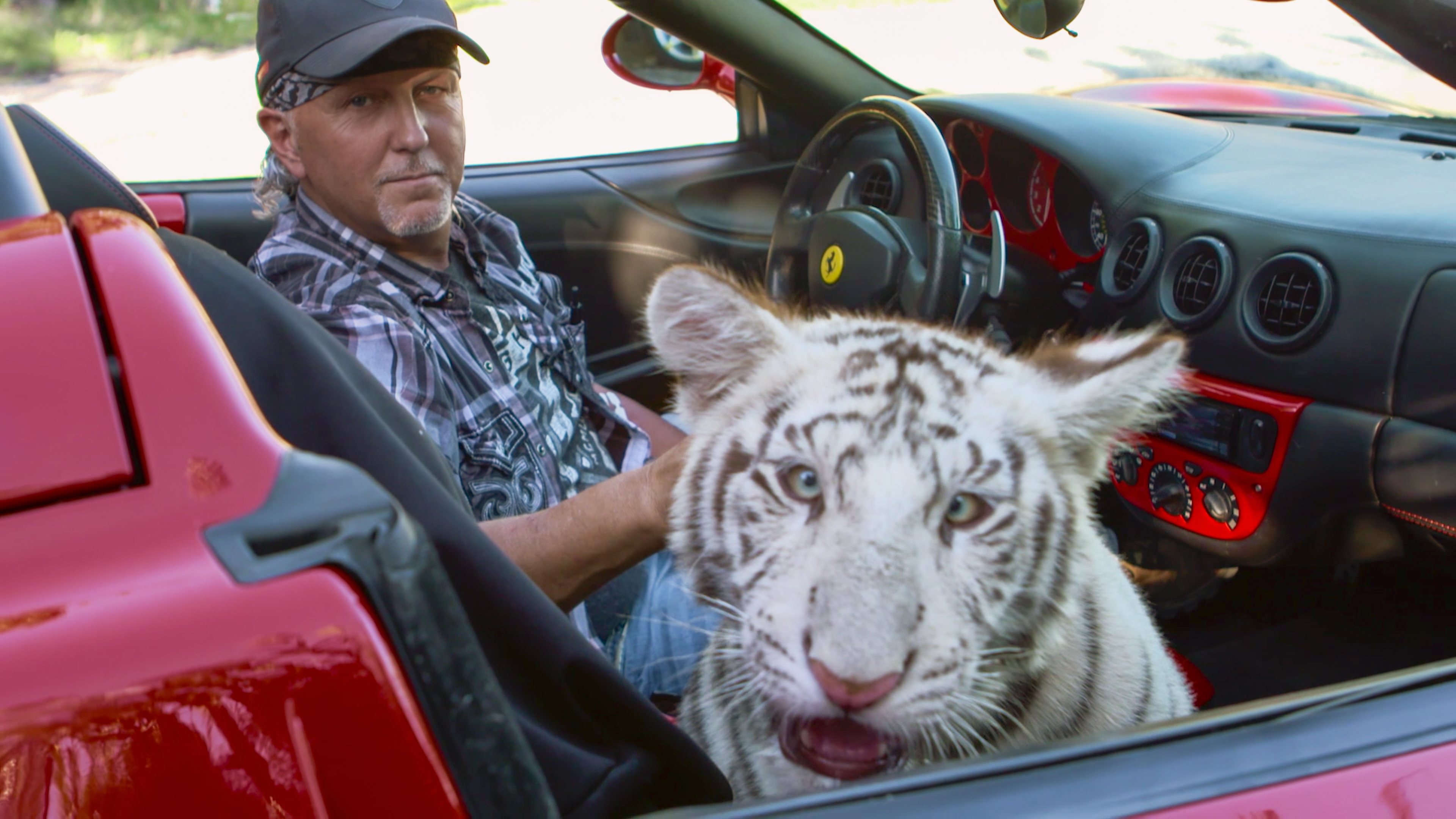 A man sits in a hot-pink convertible car with a blue-eyed white tiger in the passenger seat, staring into the camera.