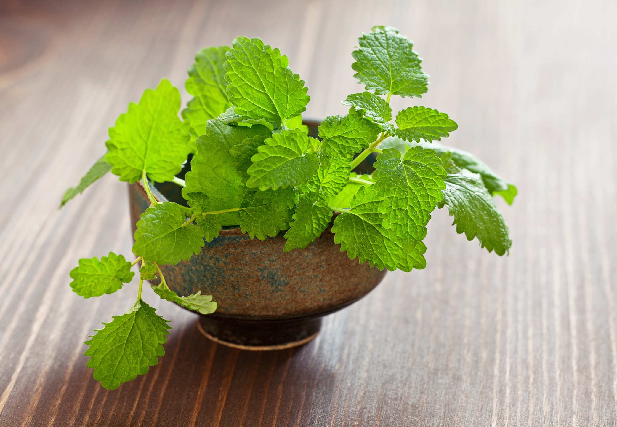 Lemon balm has been used for anxiety and depression, but does it work?