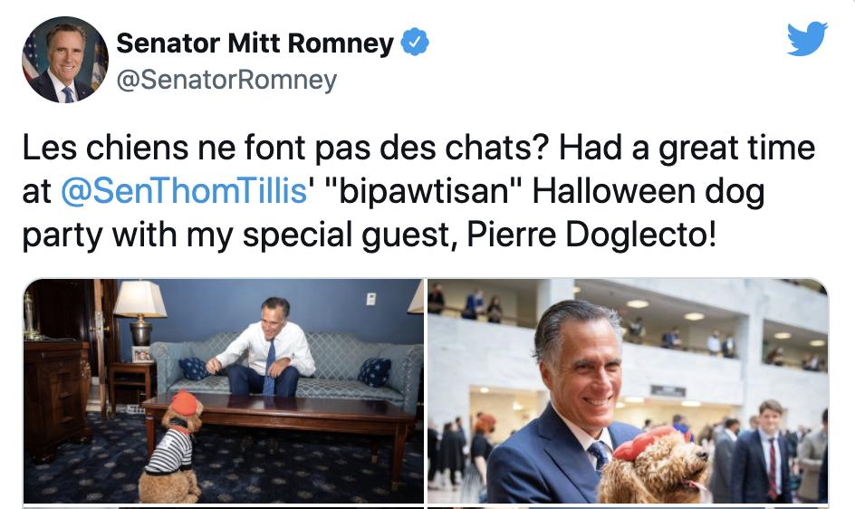 Mitt Romney's dog costumes for Halloween.
